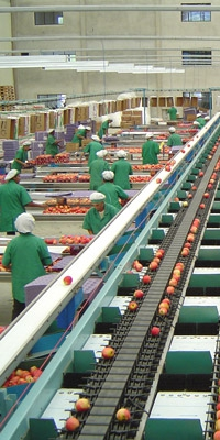 Post Harvest Processing Solutions